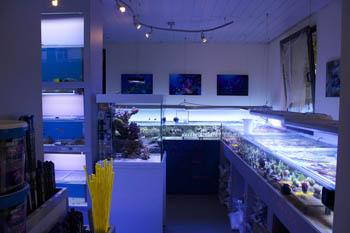 Mewa store meerwasser aquaristik fachgesch ft in darmstadt for Meerwasser shop